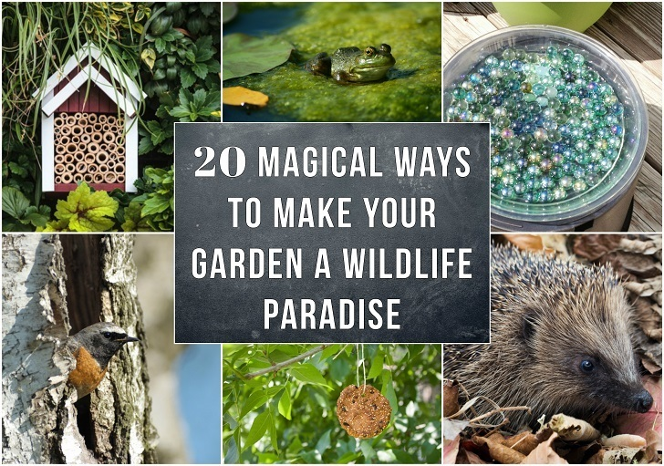 20 Magical Ways To Make Your Garden A Wildlife Paradise