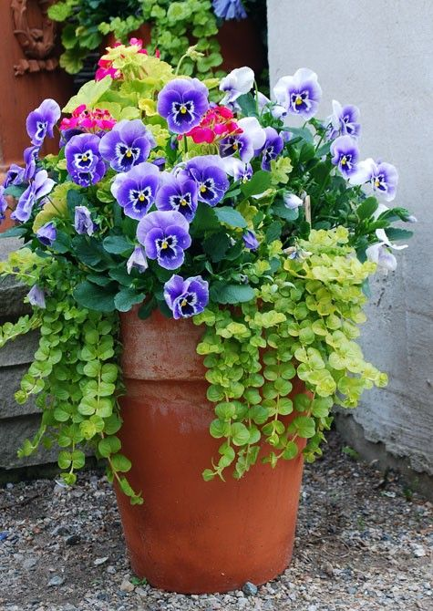 A Bold Pot And Blue Pansies That Make Everything Look Better. This Awesome  Gardening Idea Can Be Used In Almost Any Zone!