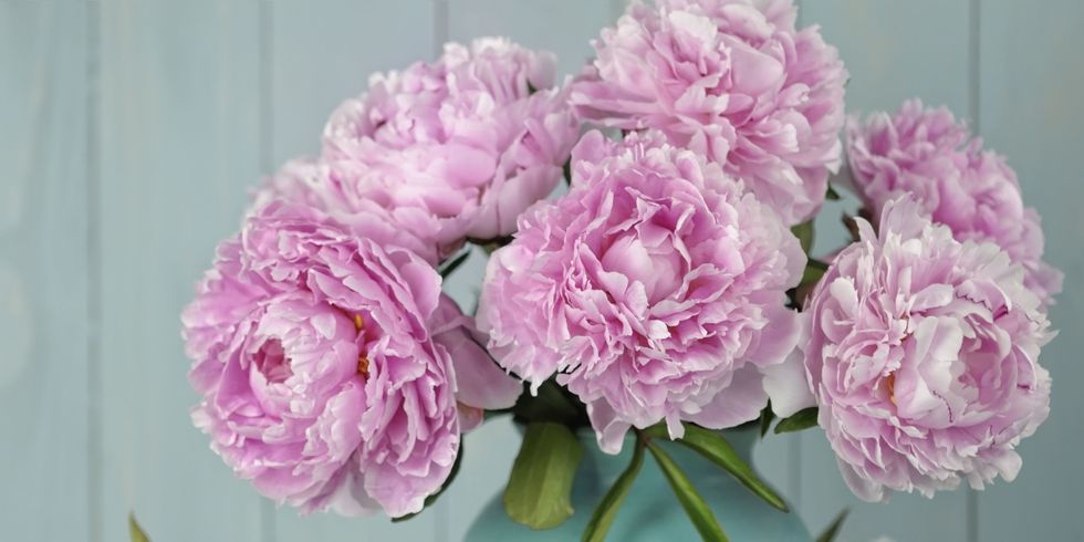 9-tips-growing-peonies