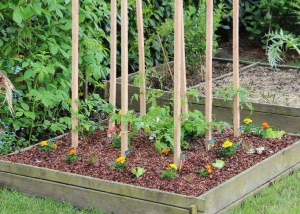 companion-plant-garden