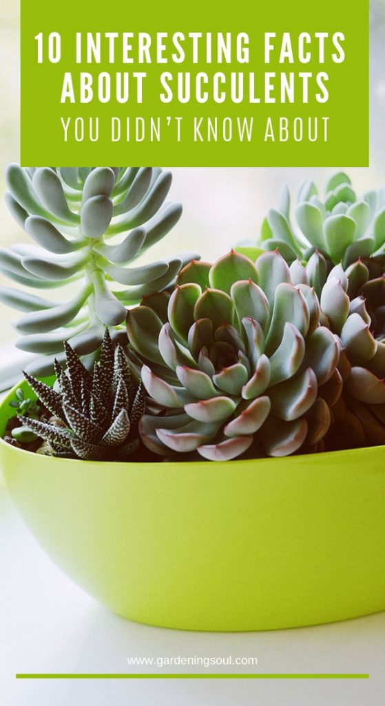 10 Interesting Facts About Succulents, You Didn't Know About