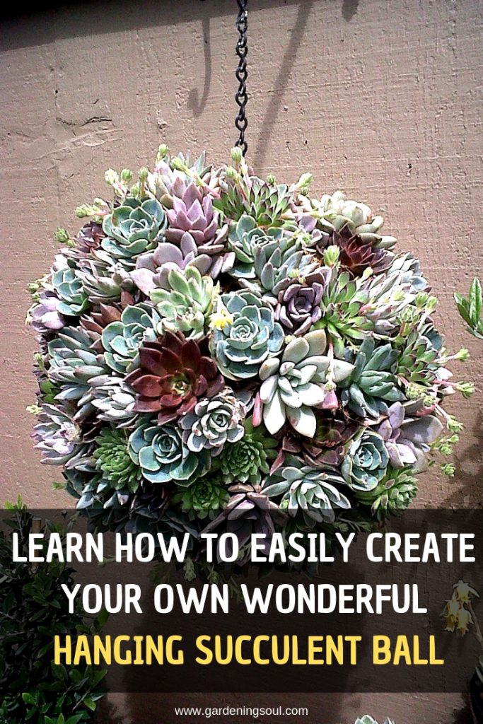 Learn How To Easily Create Your Own Wonderful Hanging Succulent Ball