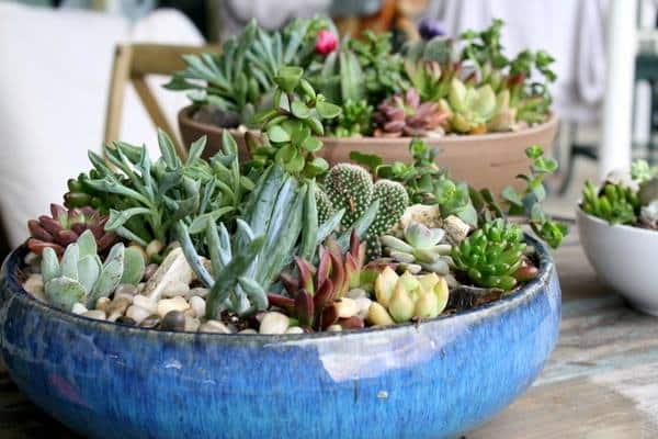 plant-succulent-bowl