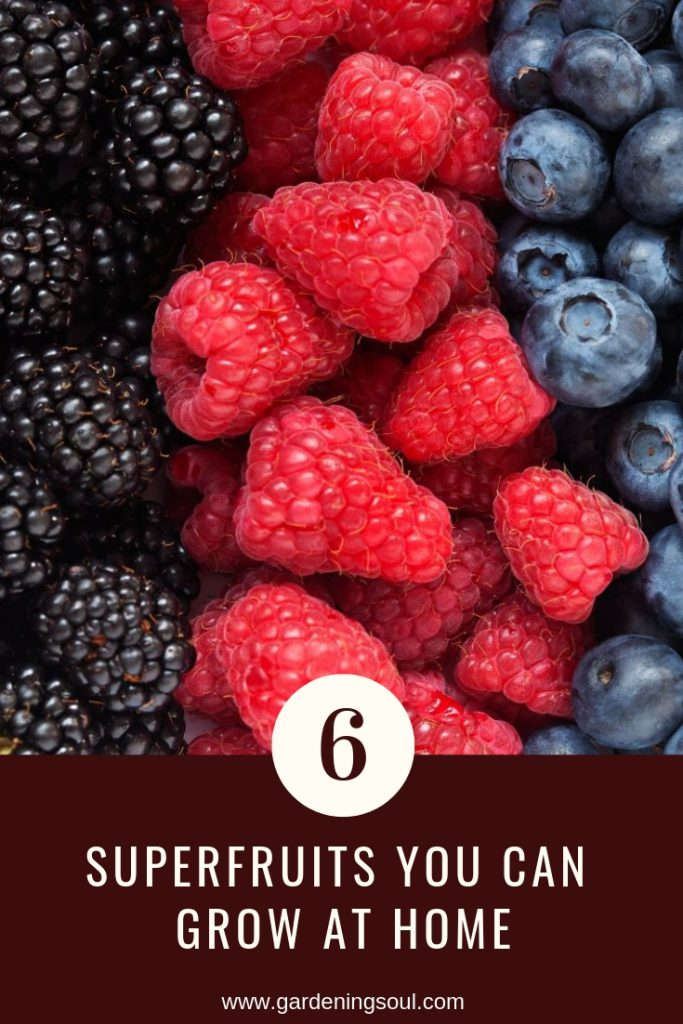 6 Superfruits You Can Grow At Home