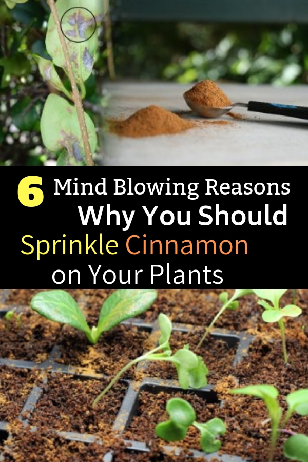 6 Mind Blowing Reasons Why You Should Sprinkle Cinnamon on Your Plants