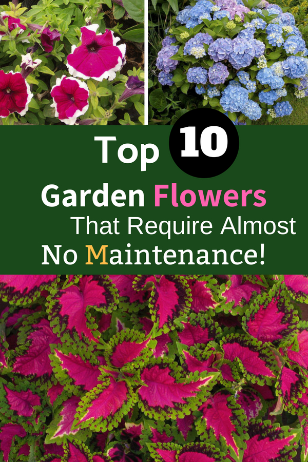 Top 10 Garden Flowers That Require Almost No Maintenance!