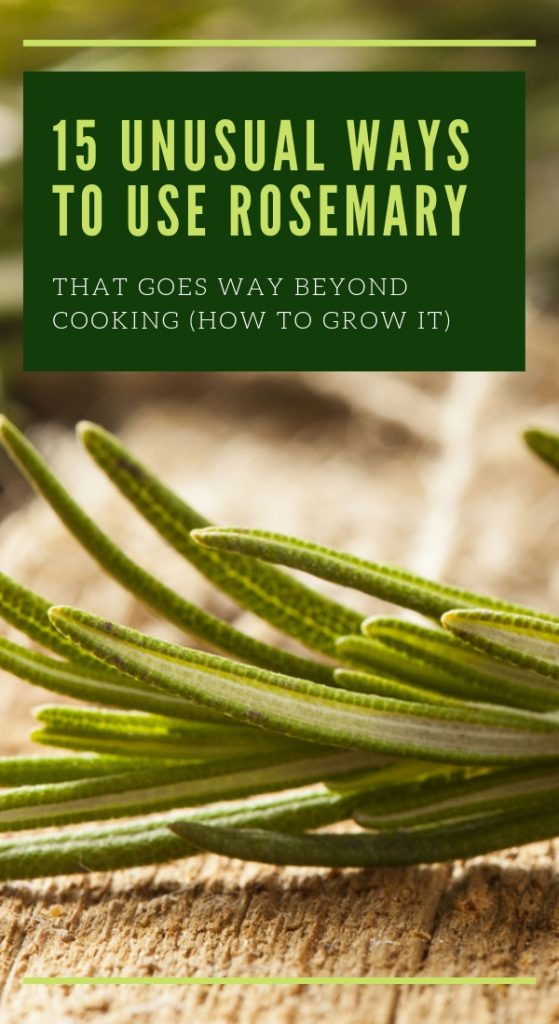 15 Unusual Ways To Use Rosemary That Goes Way Beyond Cooking (How to Grow it)