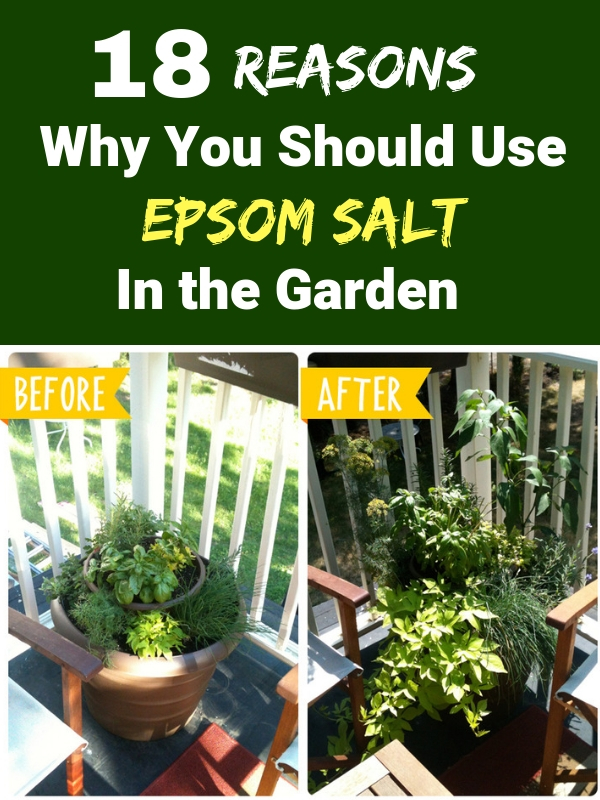 18 Reasons Why You Should Use Epsom Salt In the Garden