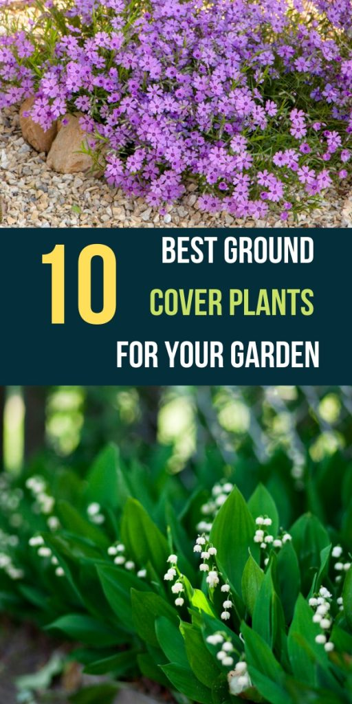 10 Best Ground Cover Plants For Your Garden