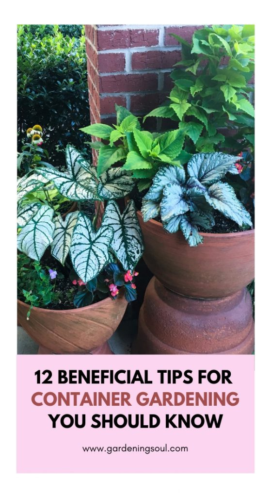 12 Beneficial Tips for Container Gardening You Should Know