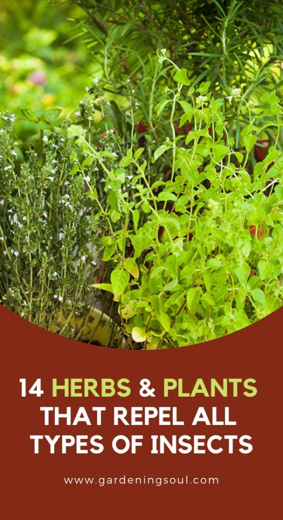 14 Herbs & Plants That Repel All Types Of Insects