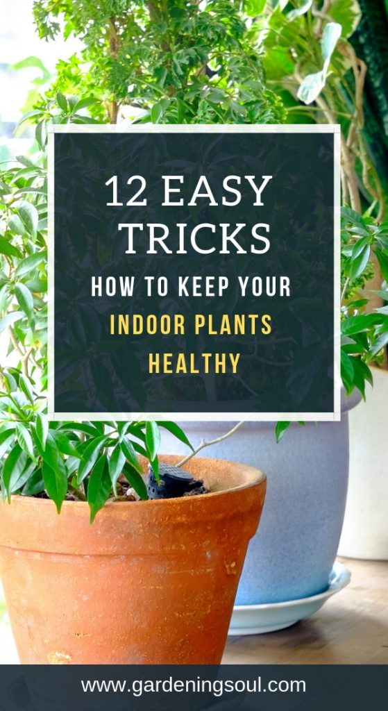 12 Easy Tricks-How To Keep Your Indoor Plants Healthy!