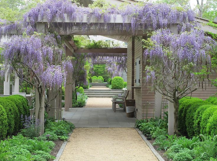 Wisteria - 15 Best Climbing Plants For Your Pergola And Arbor