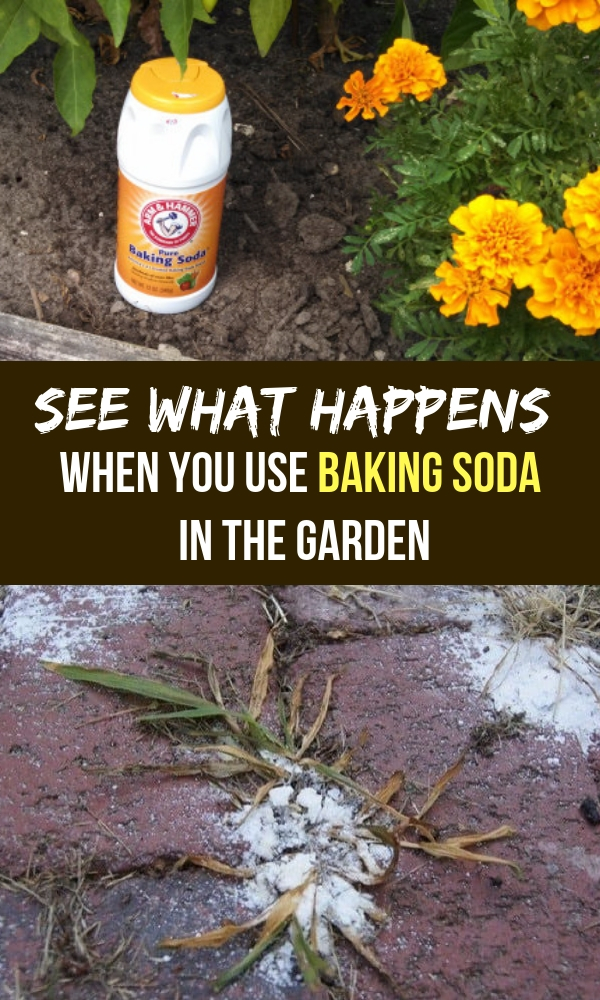 See What Happens When You Use Baking Soda In The Garden