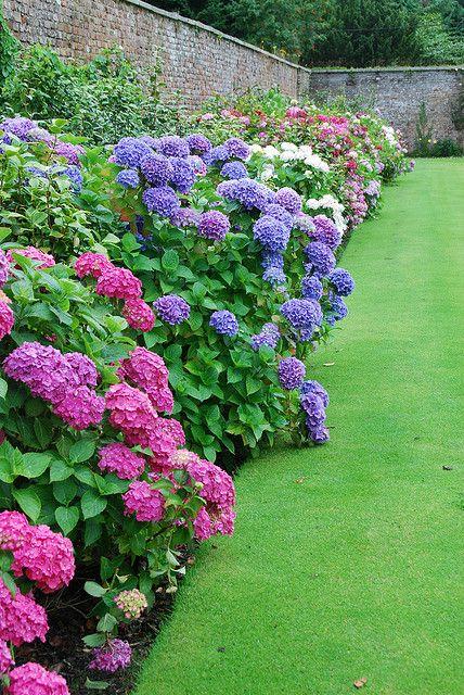 Create Your Dreamy Garden With These Hydrangea Landscape Ideas