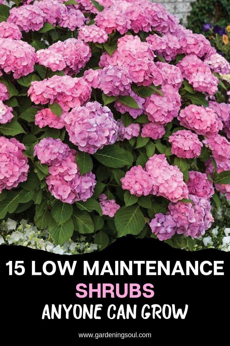 15 Low Maintenance Shrubs Anyone Can Grow
