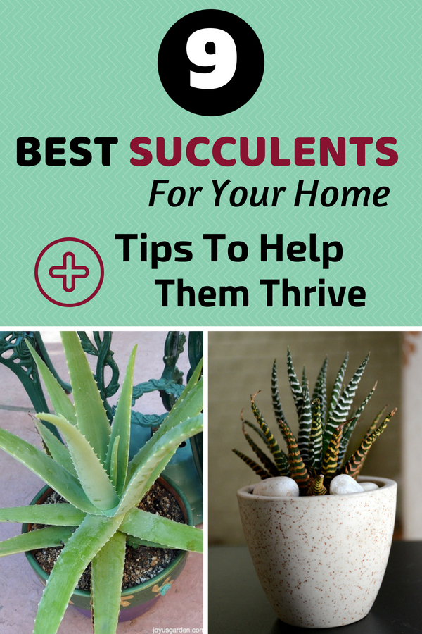 9 Best Succulents For Your Home + Tips To Help Them Thrive