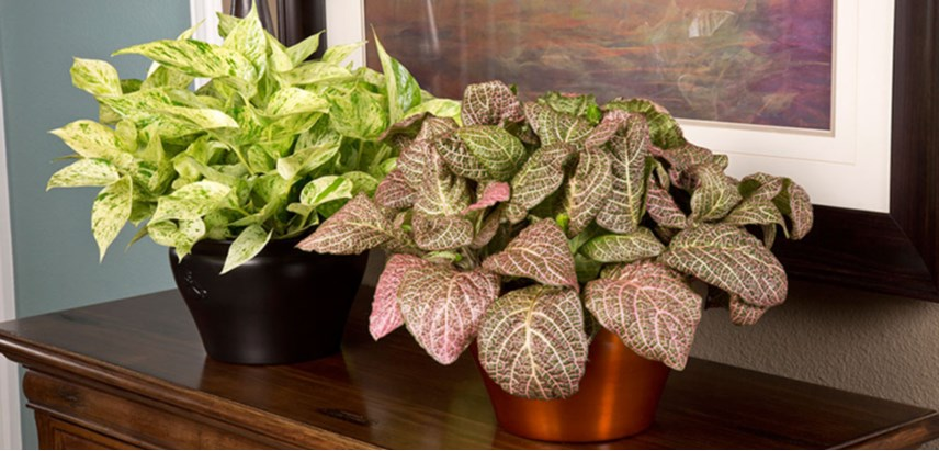14 Houseplants That Thrive In Low Light