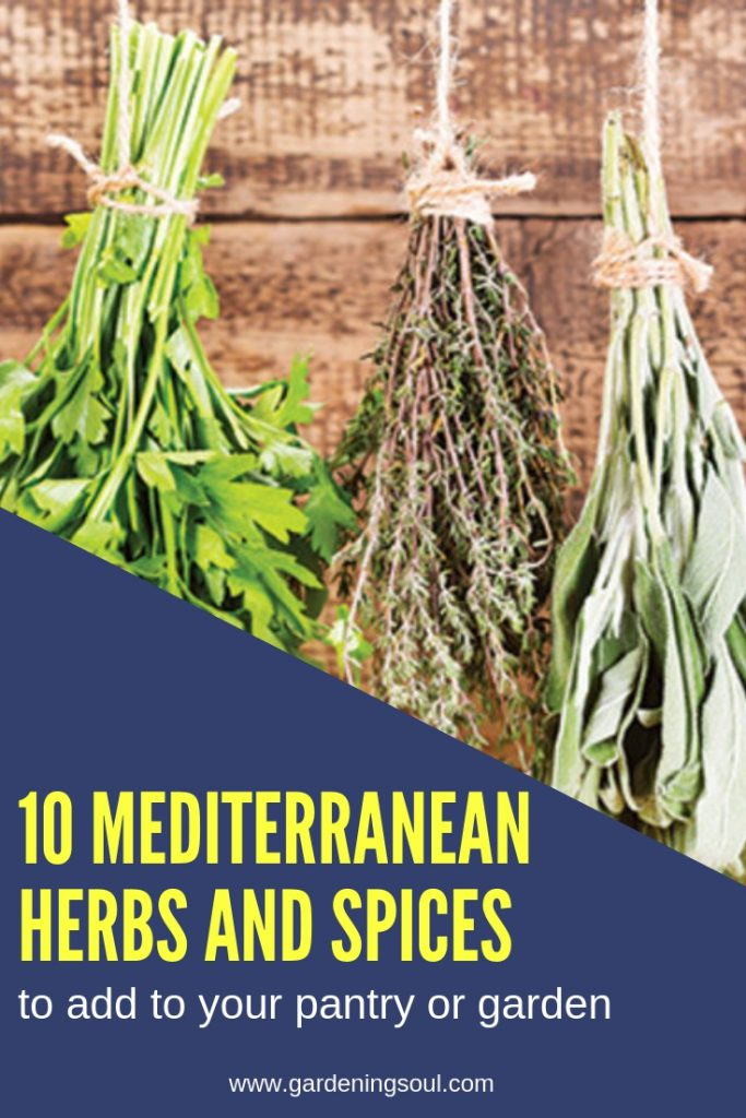 10 Mediterranean Herbs and Spices to Add to Your Pantry (or Garden)