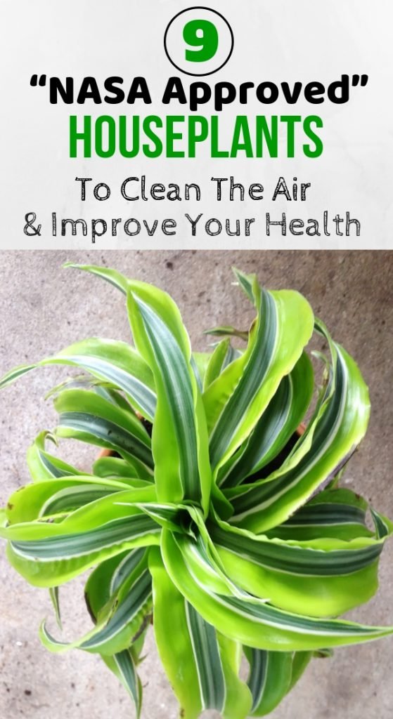 """9 """"NASA Approved"""" Houseplants To Clean The Air & Improve Your Health"""