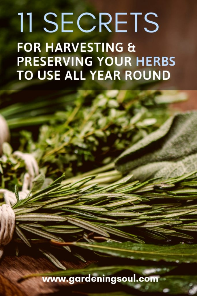 11 Secrets For Harvesting & Preserving Your Herbs To Use All Year Round