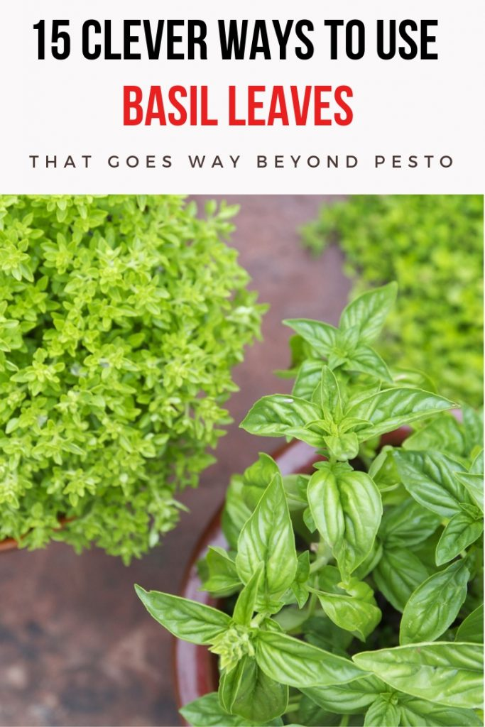 15 Clever Ways To Use Basil Leaves That Goes Way Beyond Pesto