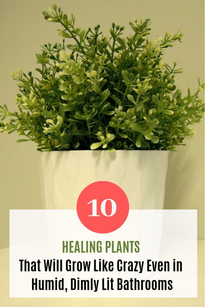 10 Healing Plants That Will Grow Like Crazy Even in Humid, Dimly Lit Bathrooms