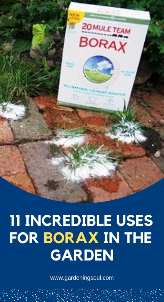 11 Incredible Uses for Borax in the Garden