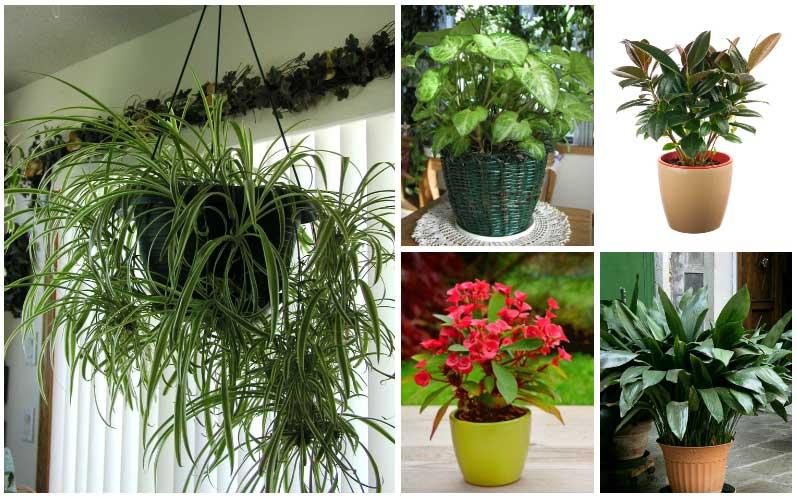 23 Easy to Grow Houseplants