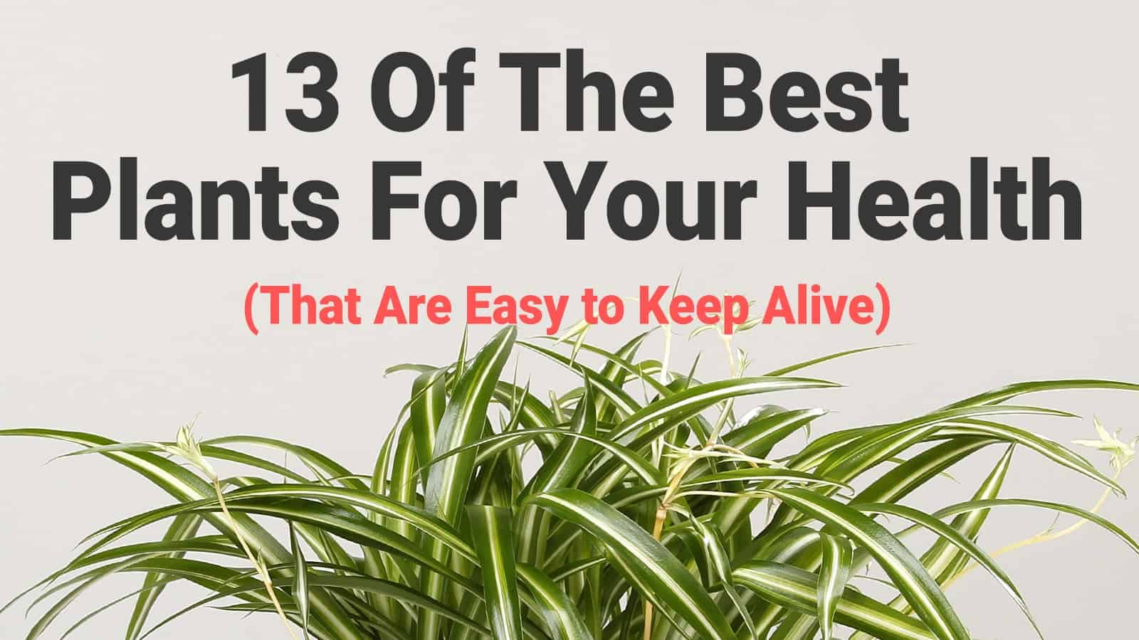 13 Of The Best Plants For Your Health (That Are Easy to Keep Alive)