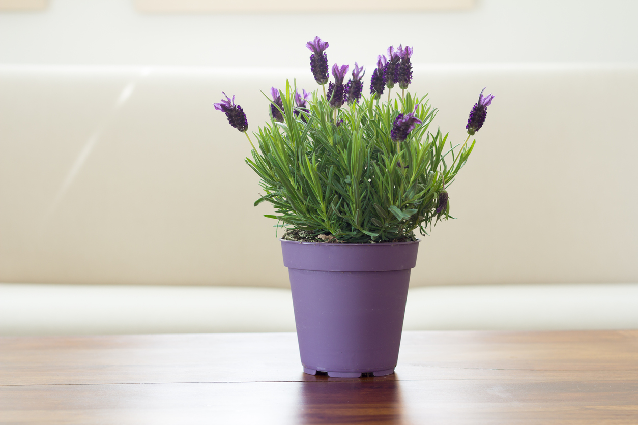 15 Best Smelling Houseplants To Perfume Your Home