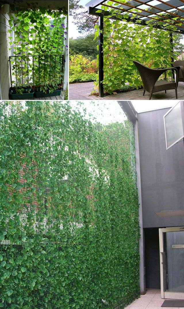 Try These 10 Ideas for Adding Privacy to Backyard Oasis