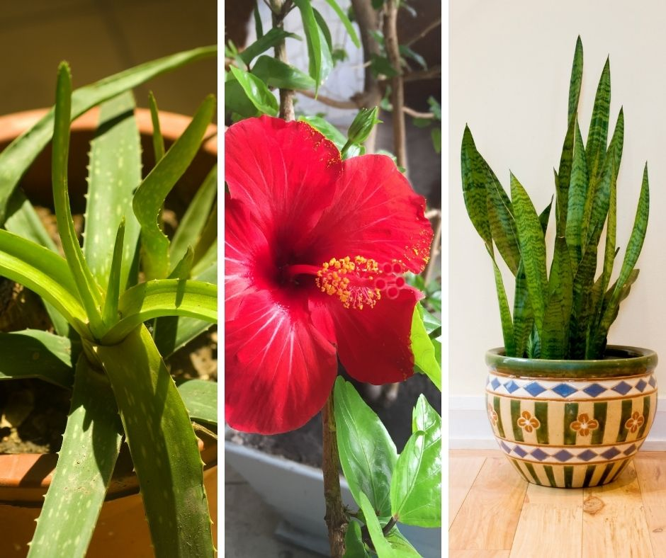 10 Houseplants That Can Tolerate Direct Sunlight